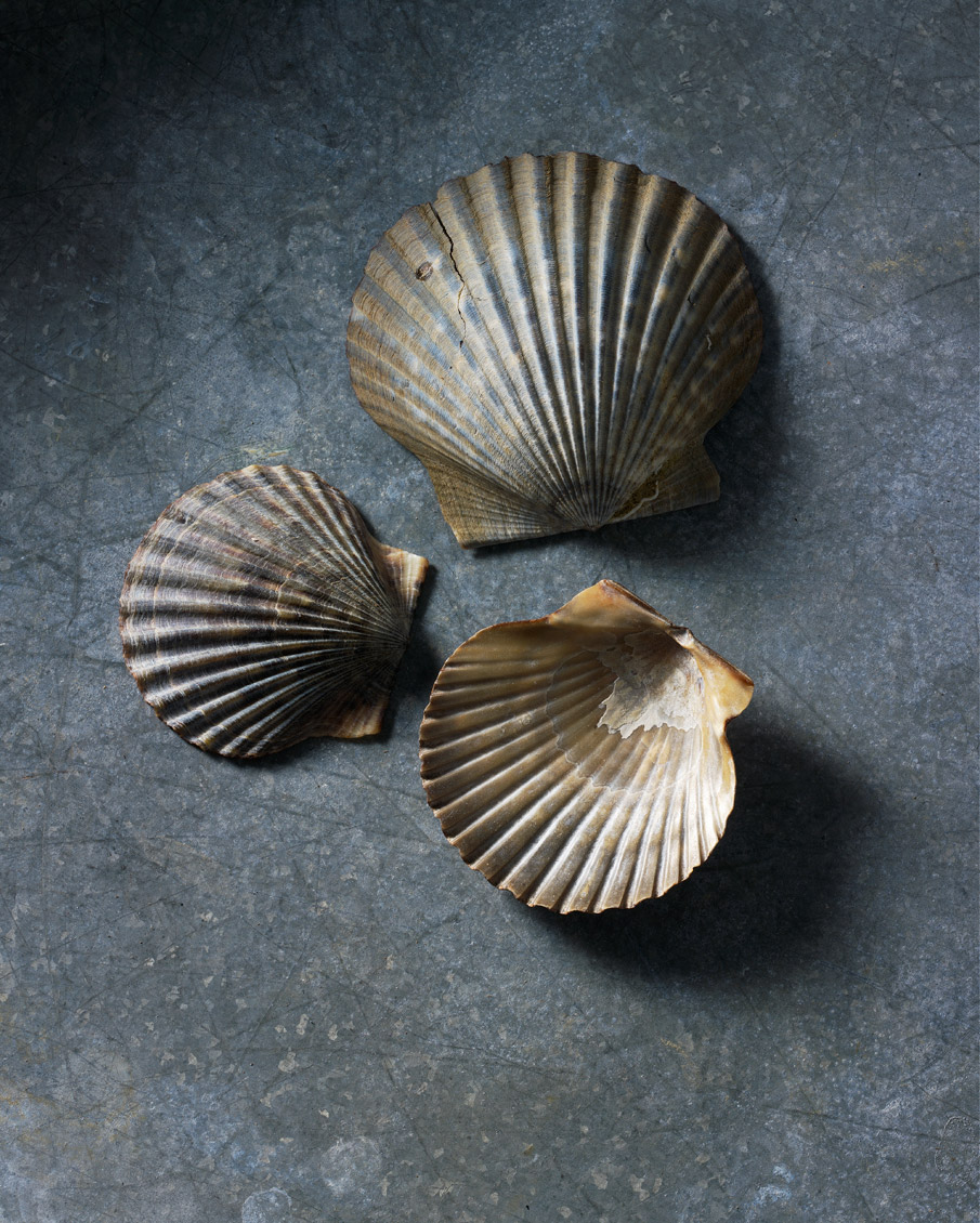 18-SCALLOP_SHELLS-WEBAPa